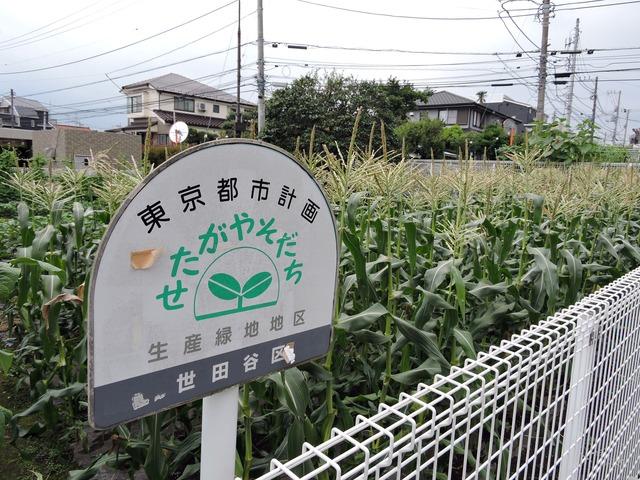 生産緑地法改正について