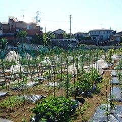 生産緑地はどう変わる?都市農地の貸借の円滑化に関する法律案