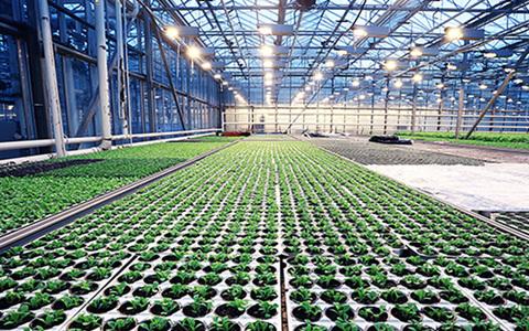 市民農園整備促進法とは