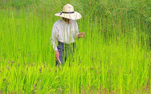 農地の売買・賃貸借の方法- 農地の売買・賃貸借(後編)
