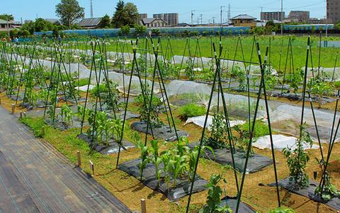 市民農園を開設するには?